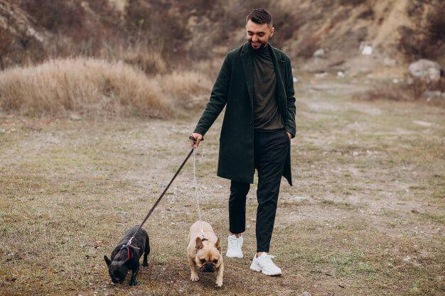 Adestramento de cães, saiba tudo sobre.